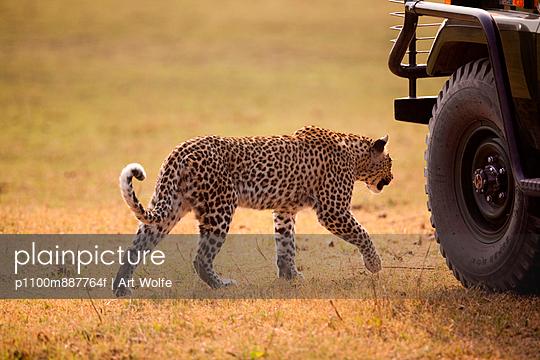 Leopard - p1100m887764f by Art Wolfe