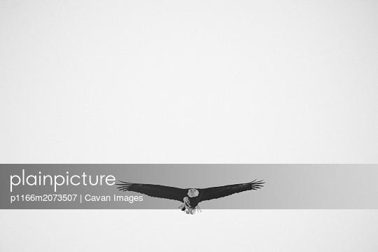 p1166m2073507 von Cavan Images