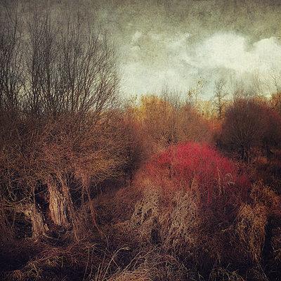 The Wild Day - p1633m2211120 by Bernd Webler