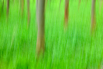 Trees, Forest, Bielefeld, NRW, Germany - p871m1073475f by Thorsten Milse