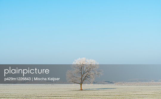 p429m1226843 von Mischa Keijser