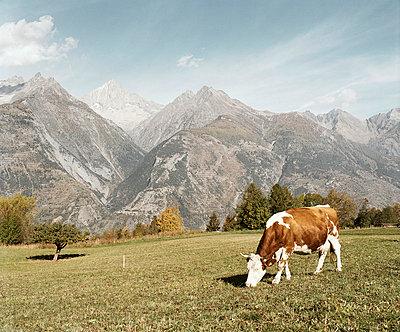 Agrarwirtschaft; - p7510002 von Dieter Schwer