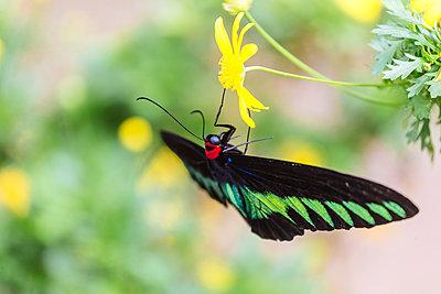 Butterfly on flower - p343m1578174 by Konstantin Trubavin