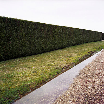 Straight hedge - p9110498 by Benjamin Roulet