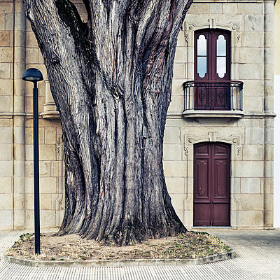 Knobby tree in front of stately home, Viveiro, Spain - p1542m2142295 by Roger Grasas