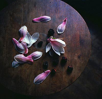 Scattered petals on tabletop - p1648m2237571 by KOLETZKI