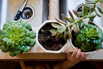 Cropped image of boy hand reaching for succulent plants in kitchen - p1166m1210620 by Cavan Images