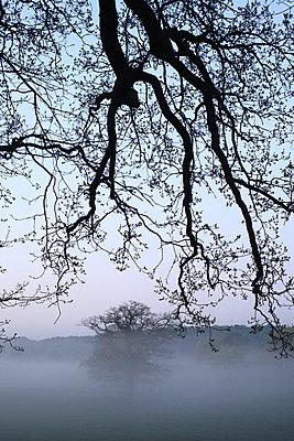 Morgennebel - p1016m815720 von Jochen Knobloch