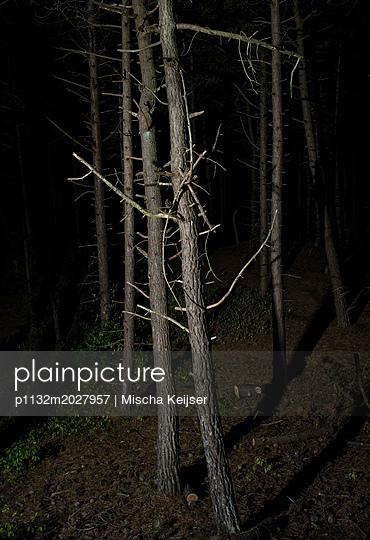 Nacht im Wald - p1132m2027957 von Mischa Keijser