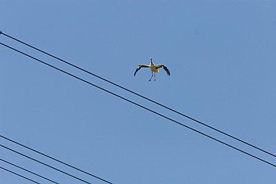 Fliegender Storch - p4170161 von Pat Meise