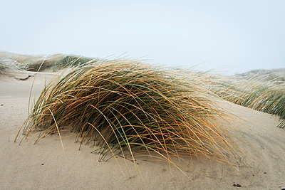 Dune - p417m1486936 by Pat Meise