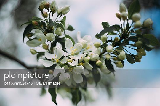 p1166m1524743 von Cavan Images