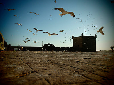 Seagulls on the harbour - p1320581 by Peer Hanslik