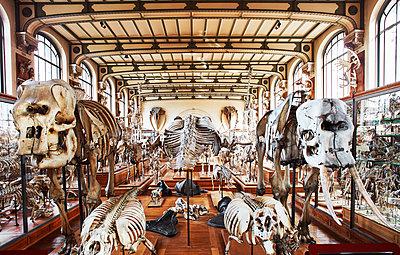 Natural history museum - p1397m2054570 by David Prince