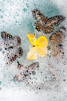 p451m2065634 by Anja Weber-Decker