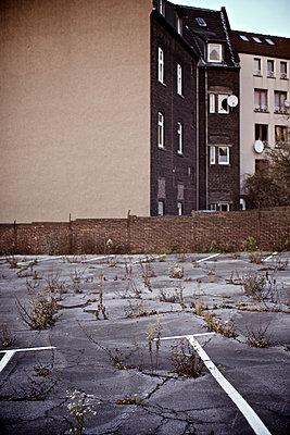 Unkraut wuchert im Asphalt eines Parkplatzes - p586m972965 von Kniel Synnatzschke
