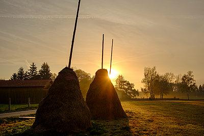 Germany, Sindelsdorf, two haystacks at sunrise - p300m2059191 by Lisa und Wilfried Bahnmüller