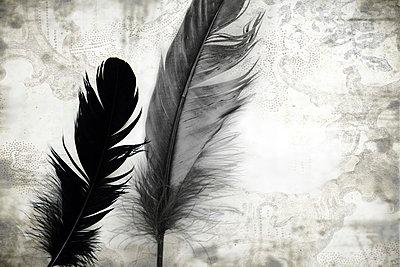 Raven - p4500282 by Hanka Steidle