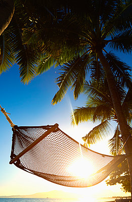 Hammock hanging between palm trees on tropical beach - p555m1415483 by Colin Anderson