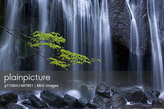 p1100m1497851 von Mint Images