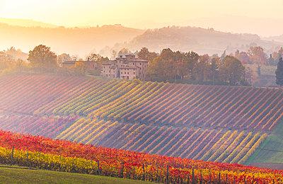 The countryside near Castelvetro, Modena Province, Emilia Romagna, Italy - p651m2033113 by Stefano Termanini