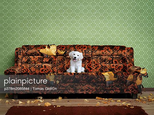 Happy Puppy - p378m2085844 by Tomas Gid̩n