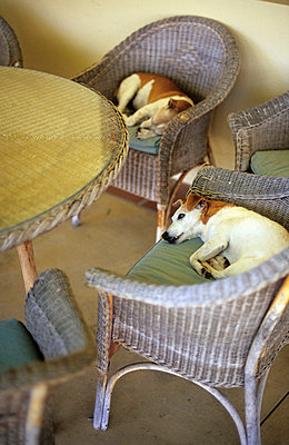 Dogs in midday heat - p1160405 by Gianna Schade