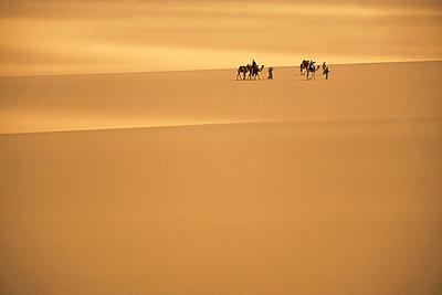 Bedouin guide leads a camel caravan through the dunes of the sand sea, EGYPT - p3435459 by Alexander Nesbitt