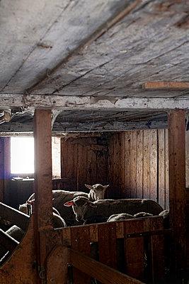 Tierhaltung - p7410031 von Christof Mattes