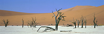 Panoramic view of sand dunes and dead trees, Dead Vlei, Namib Naukluft Park, Namibia, Africa - p871m1074015f by Lee Frost