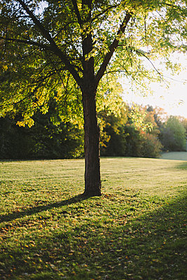 Einzelner Baum im Gegenlicht - p946m956189 von Maren Becker
