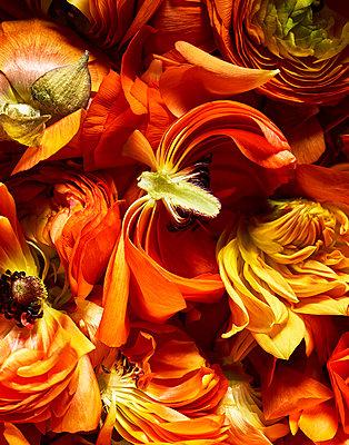 Orange coloured petals - p1397m2054652 by David Prince