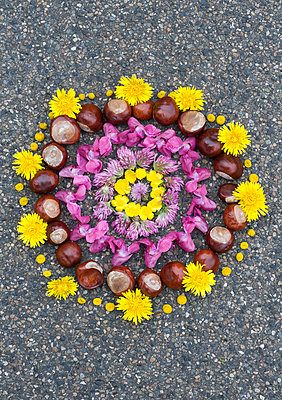 2nd of october flower mandala - p310m948305 von Astrid Doerenbruch