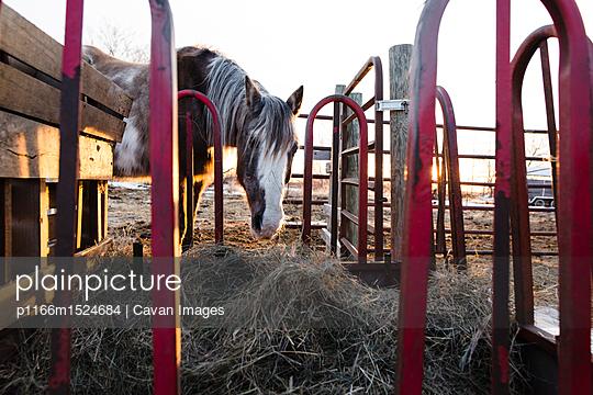 p1166m1524684 von Cavan Images