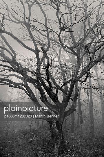 p1088m1207329 by Martin Benner