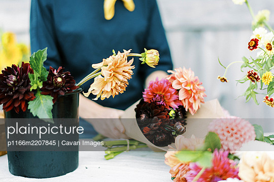 Female business owner and flower farmer arranging dahlia bouquets - p1166m2207845 by Cavan Images