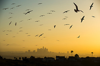 Low angle view of silhouette birds flying against sky in city during sunset - p1166m1519207 by Cavan Images
