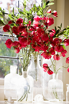 A bouquet of Sweet Pea (Lathyrus odoratus) flowers - p3019872f by Tobias Titz