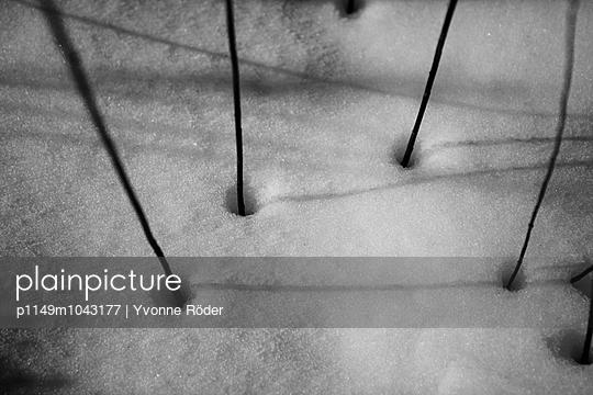 Pflanzen im Schnee - p1149m1043177 von Yvonne Röder