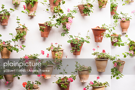 Blumentöpfe - p781m1119945 von Angela Franke