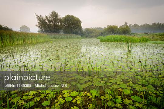 p884m1145389 von Michel Lucas/ NIS