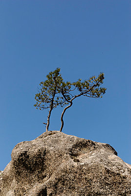 Two resiliant trees - p260m859683 by Frank Dan Hofacker