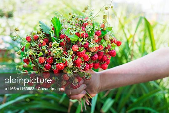 p1166m1163883 von Cavan Images