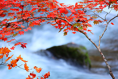 Autumn leaves - p307m974265f by Mamoru Muto