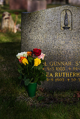 Roses in front of tombstone - p312m1139567 by Peter Rutherhagen