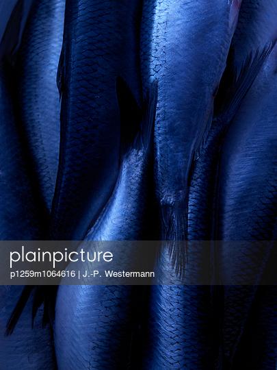 Fisch - p1259m1064616 von J.-P. Westermann