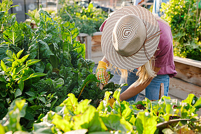 Young woman in sun hat tending to plants in community garden - p1192m2130325 by Hero Images