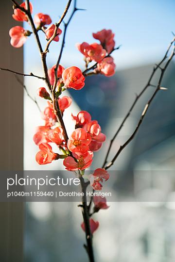 Frühlingsblüten - p1040m1159440 von Dorothee Hörstgen