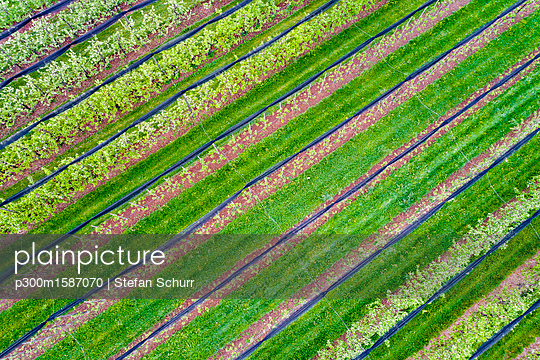 Germany, aerial view of plantation with apple trees in spring - p300m1587070 von Stefan Schurr
