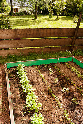 Garden with mixed vegetable patch and slug fence - p300m950625f by noonland